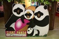 pandafamily_1.jpg